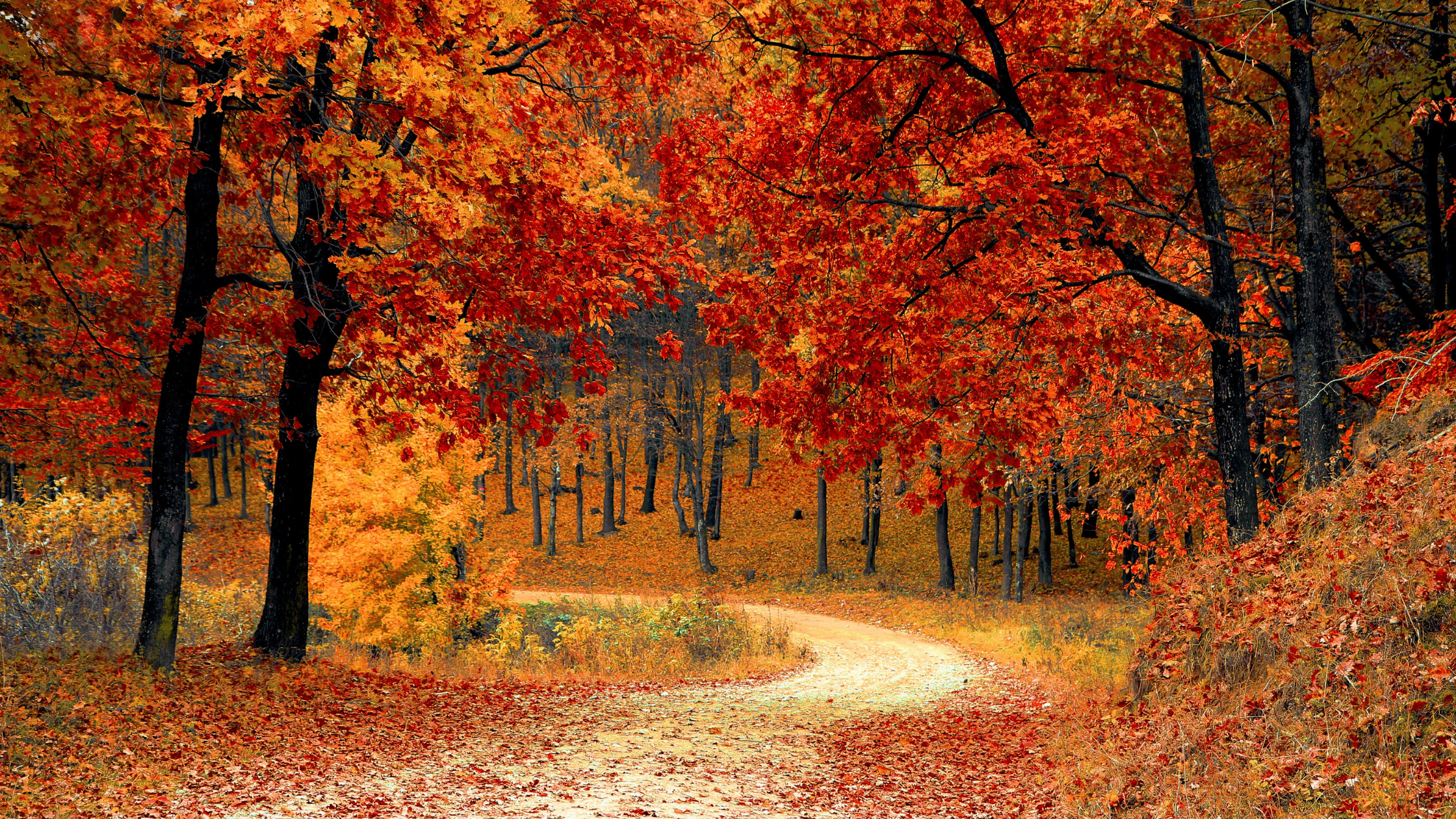 Where to See Fall Foliage in and near Delaware [2020]
